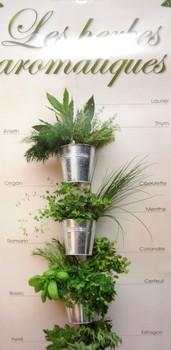 A la recherche des herbes aromatiques