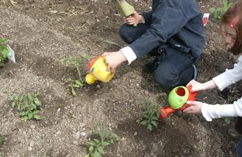 La classe de  CP jardine