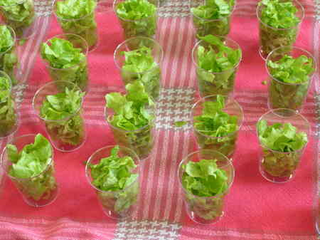 Les salades du jardin sont prêtes!
