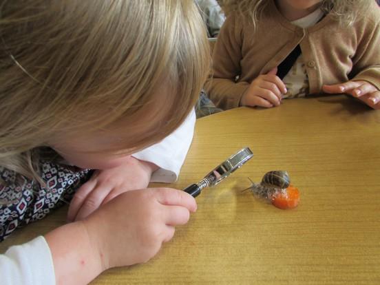 Observation des escargots...