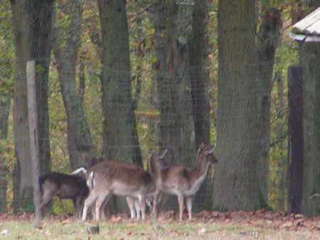 En promenade grimbosq for Dans la foret un grand cerf regardait par la fenetre