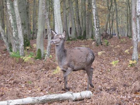 Rencontre de nos correspondants à la forêt de Grimbosq