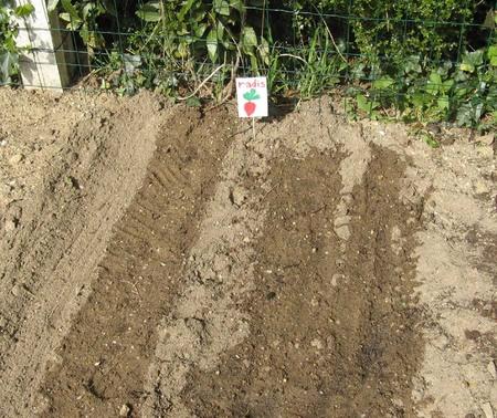 Jardinage en maternelle