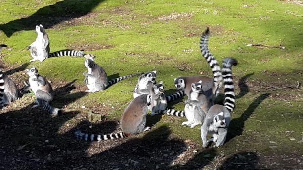 Visite au Zoo de Jurques