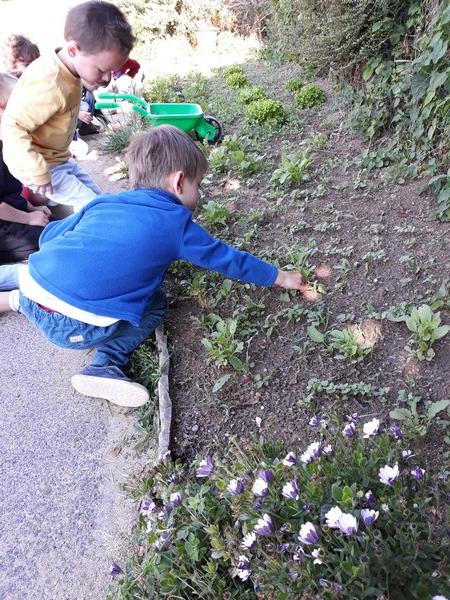 Les radis ont poussé !