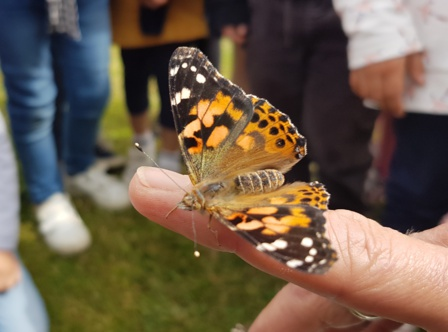 Une histoire de....Papillons!
