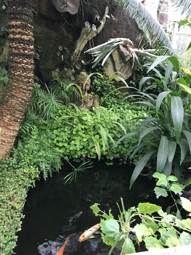 Sortie au jardin des plantes