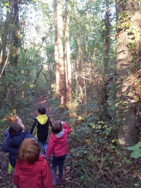 Récoltes d'automne au Bois du Caprice des MS-GS