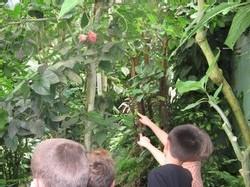 Ecole Sacré Coeur Ouistreham - Visite du Naturospace à Honfleur