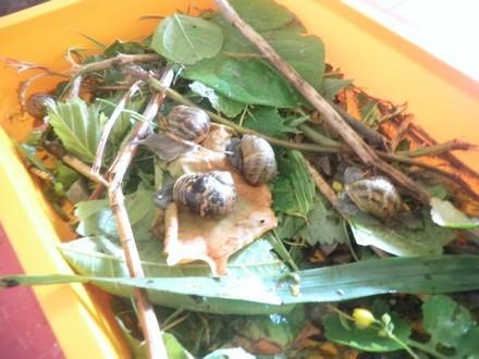 De nouveaux amis:les escargots