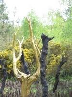 Ecole Sacré Coeur, Ouistreham, La forêt de Brocéliande