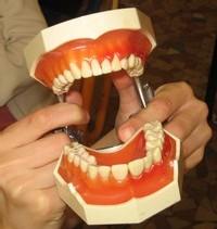 Les empreintes de dents