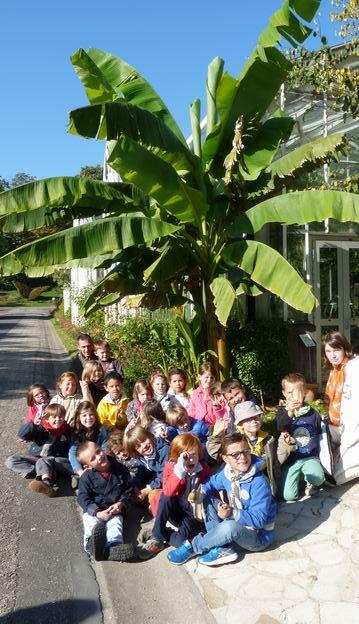 Les GS/CP visitent le jardin des plantes