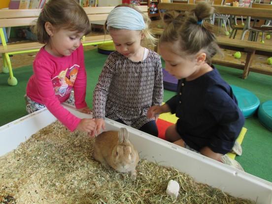 Un lapin à l'école !