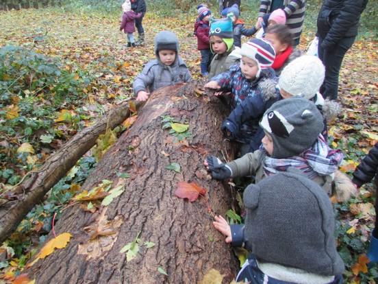 Le bois en automne.