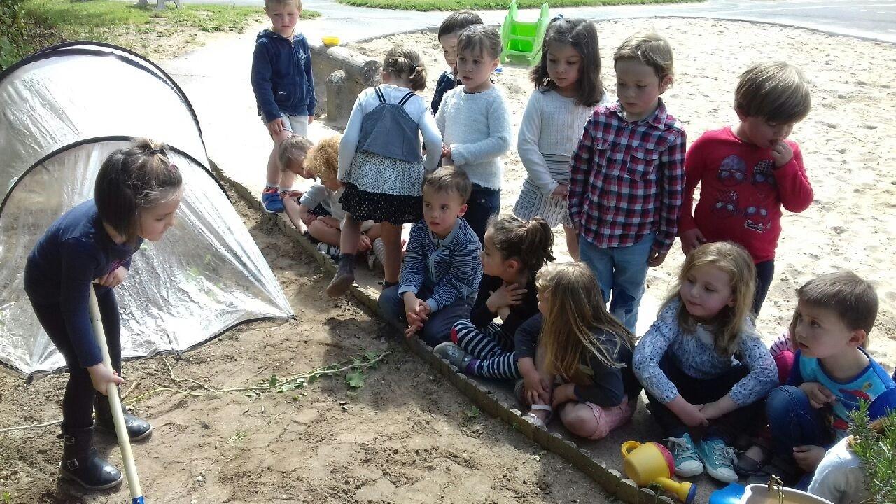 Nous avons aussi creusé… avec des pelles, mis les graines de persil puis arrosé avec des arrosoirs.