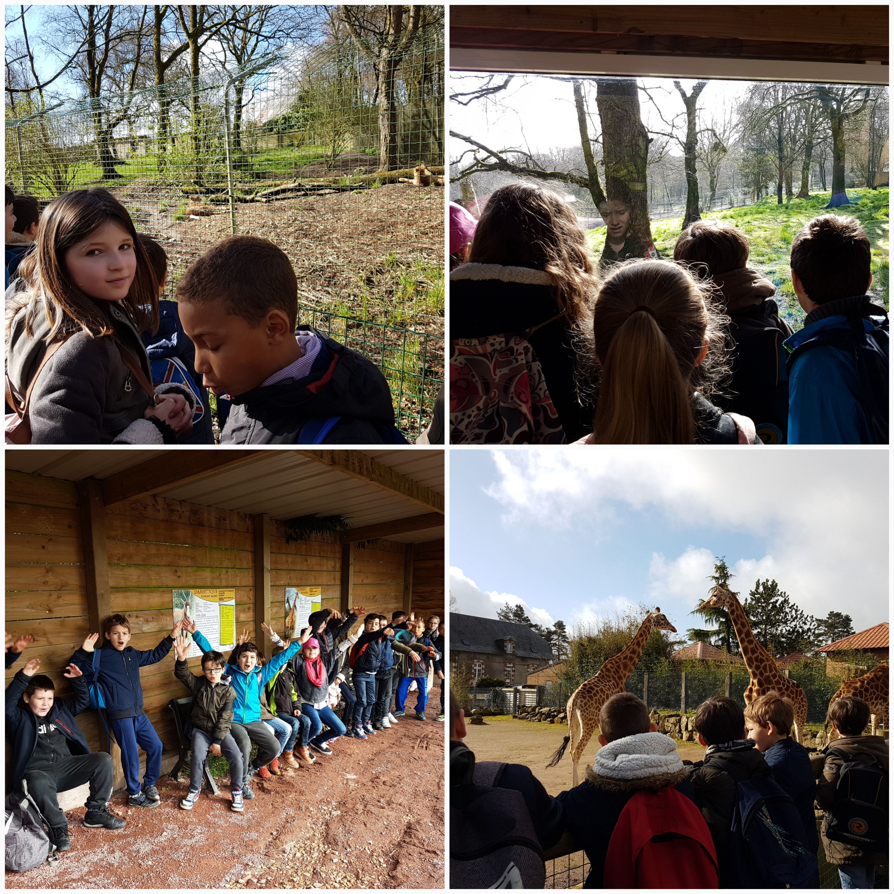Visite du zoo de Jurques des classes de MS.GS et CE2.CM1