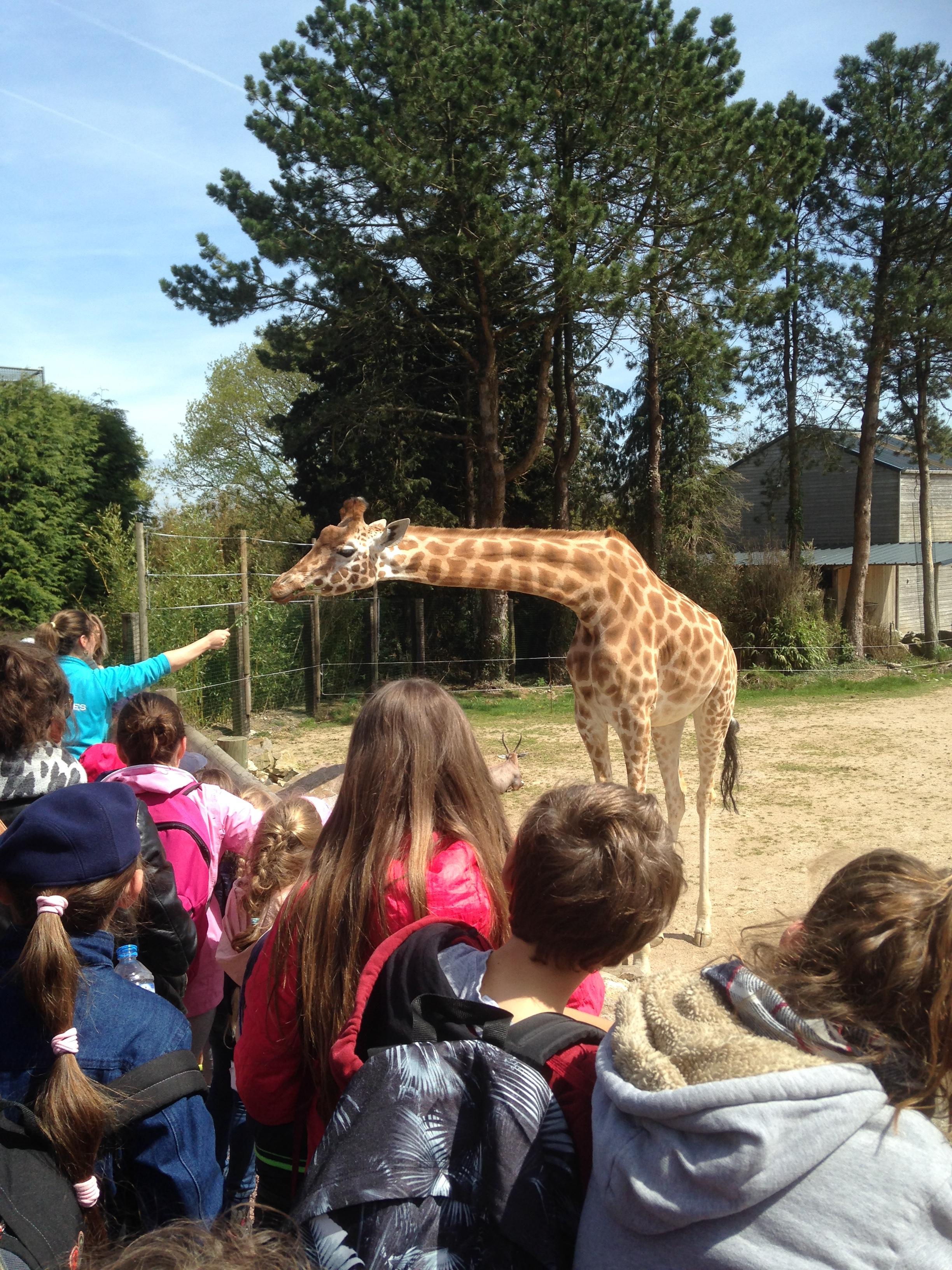 Zoo de Jurques