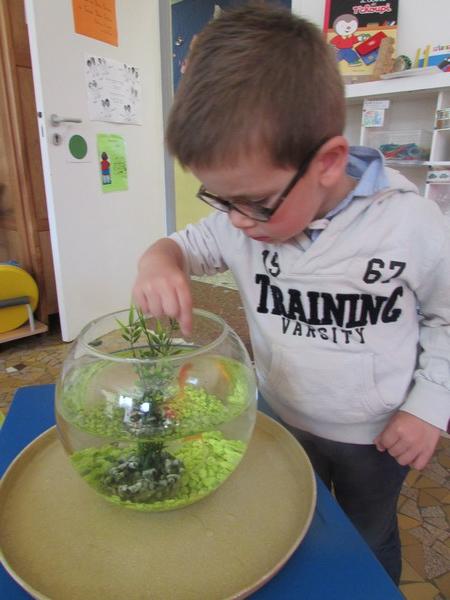 Le poisson de la classe