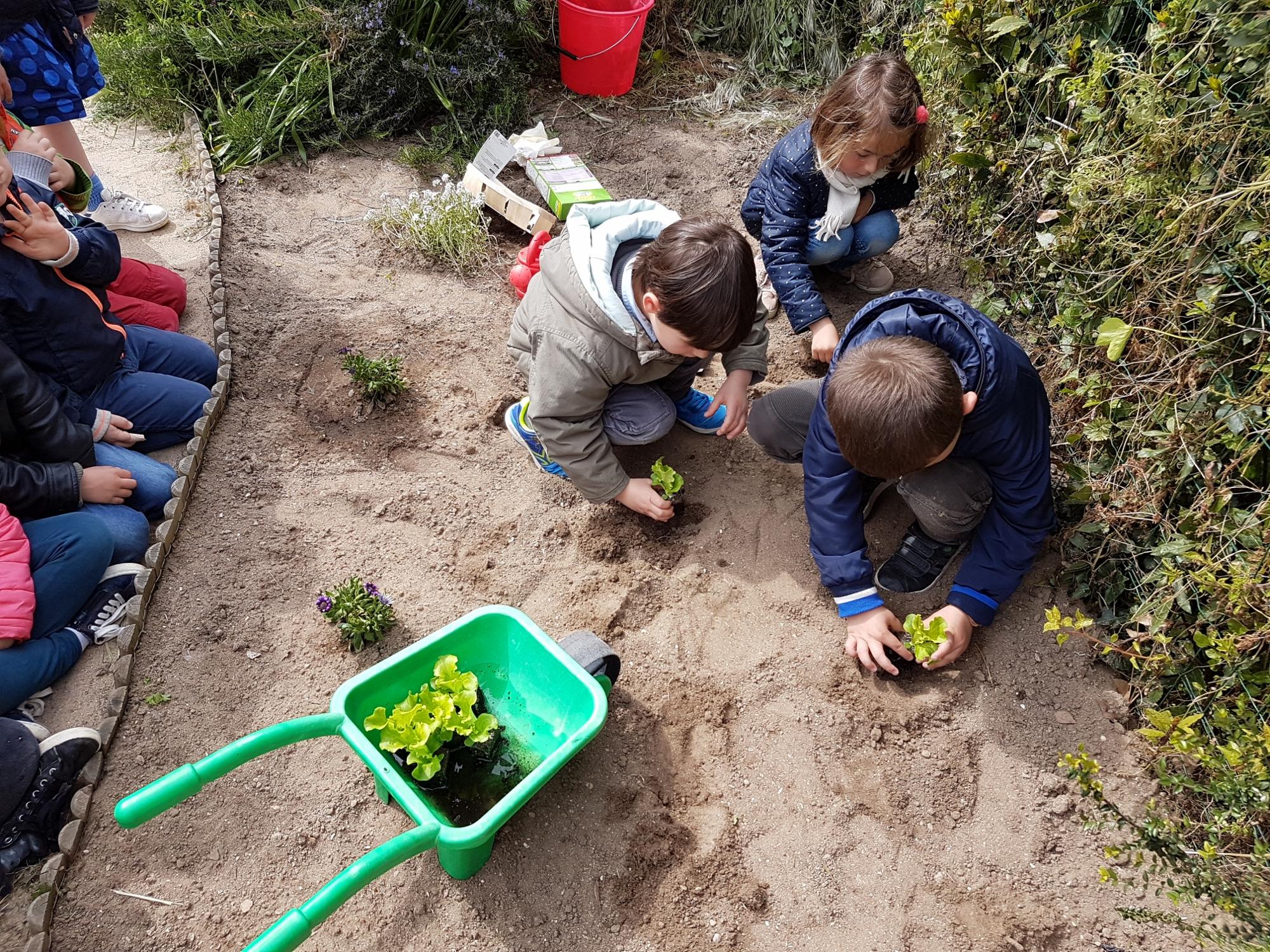Les MS-GS jardinent !