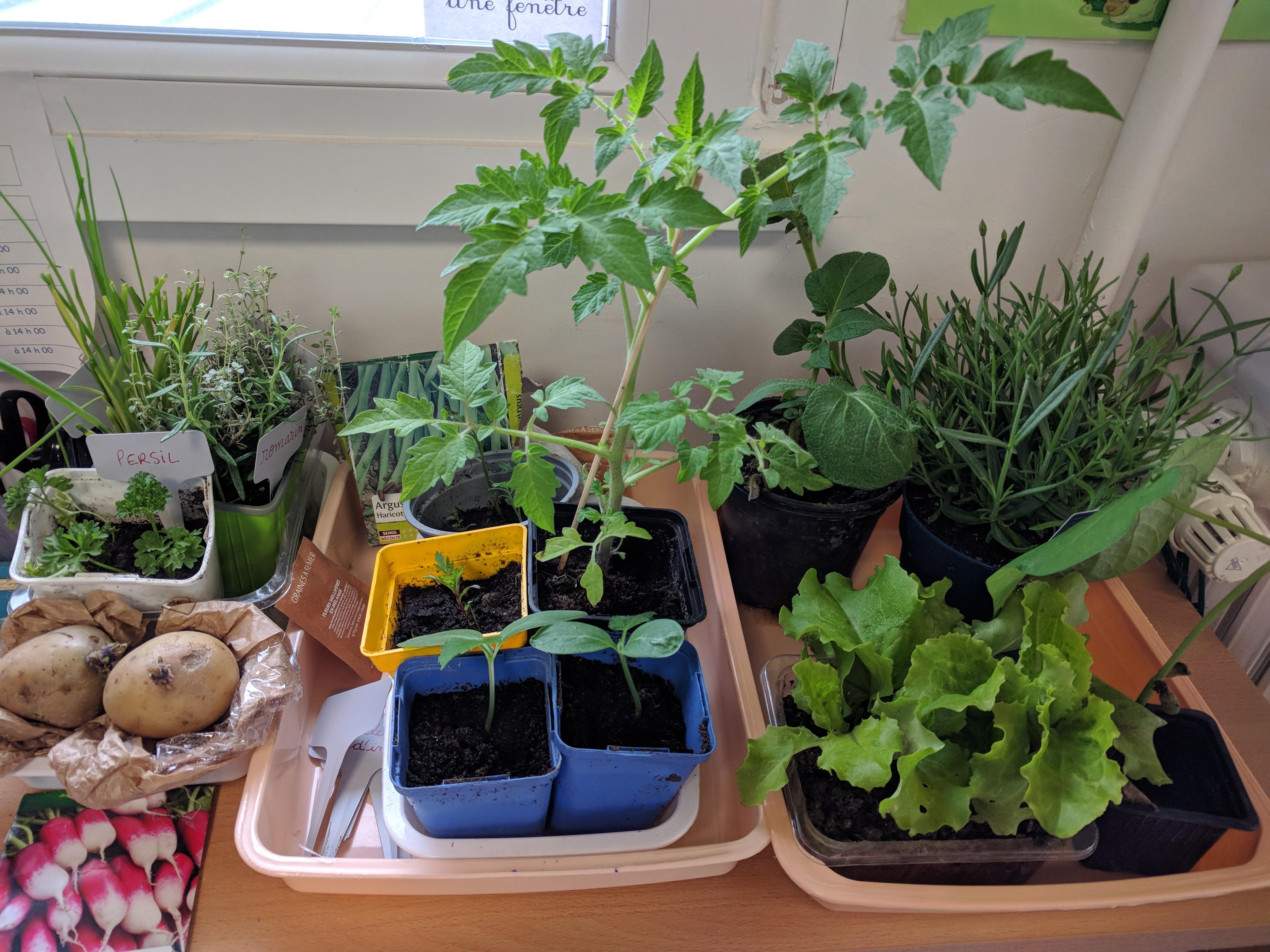 Les GS jardinent !