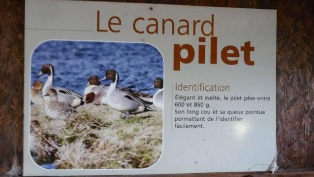 LEs GS/CP découvrent les oiseaux du marais de St SAMSON