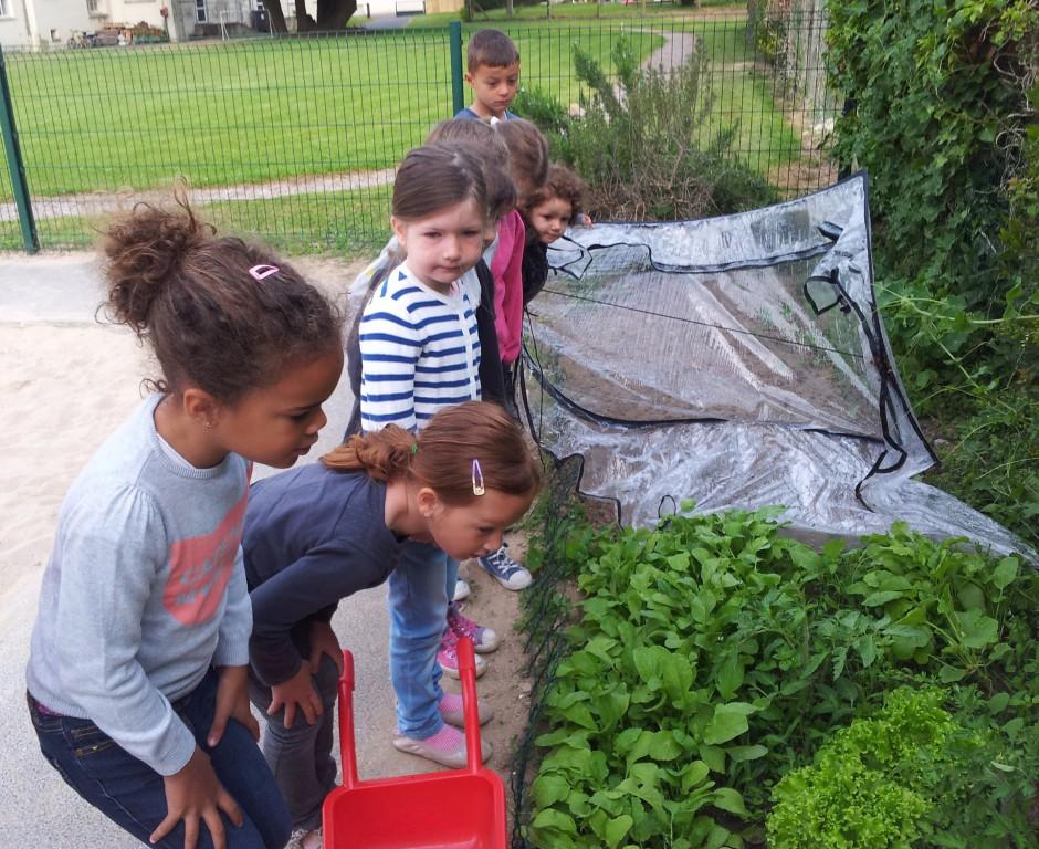 Récolte au jardin !