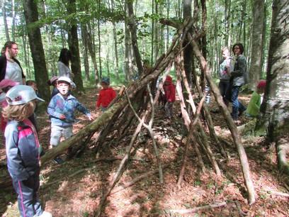 Promenons-nous dans la forêt de Balleroy