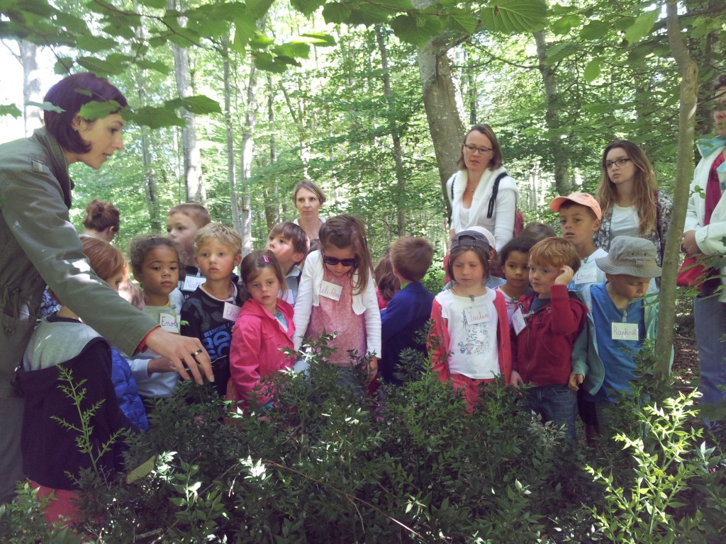 Sortie scolaire à la forêt de Balleroy