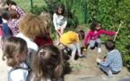 Nos plantations dans le potager de l'école