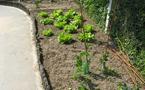 Petit tour de jardin