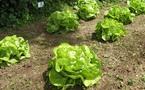 Les belles salades !