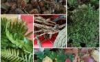 Balade sensorielle au bois du Caprice