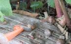 Petit escargot,porte sur son dos,sa maisonnette ...